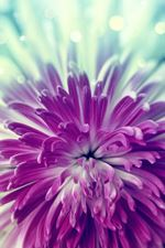 purple-flower-150.jpg